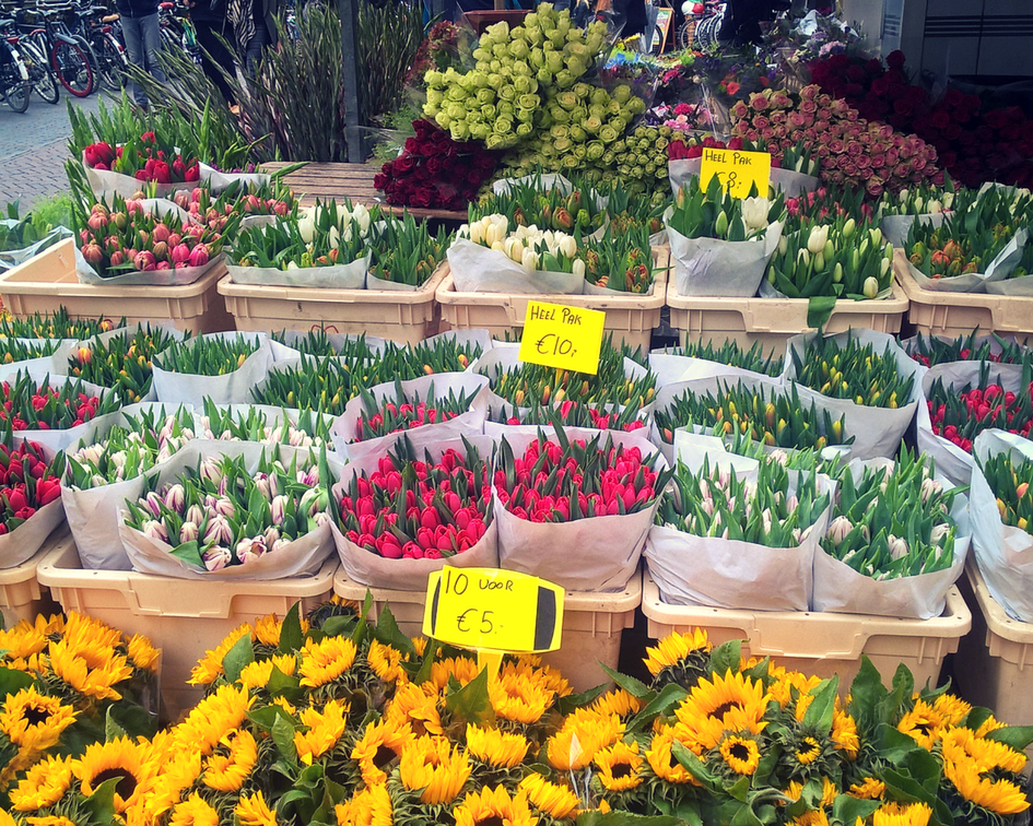 Tulips, tulips everywhere!