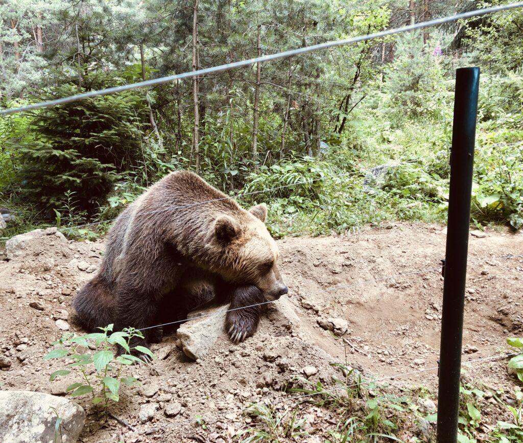 Dancing Bears Park in Belitsa