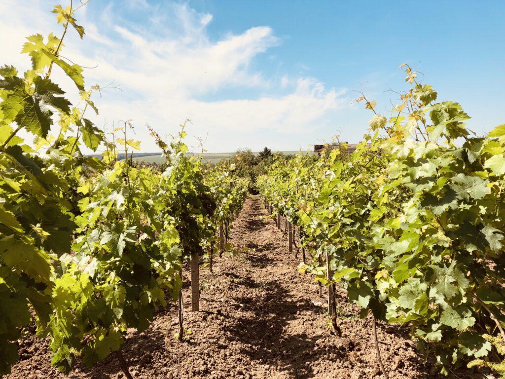 Best city in Bulgaria to visit in February wine-tasting on Trifon Zarezan Day